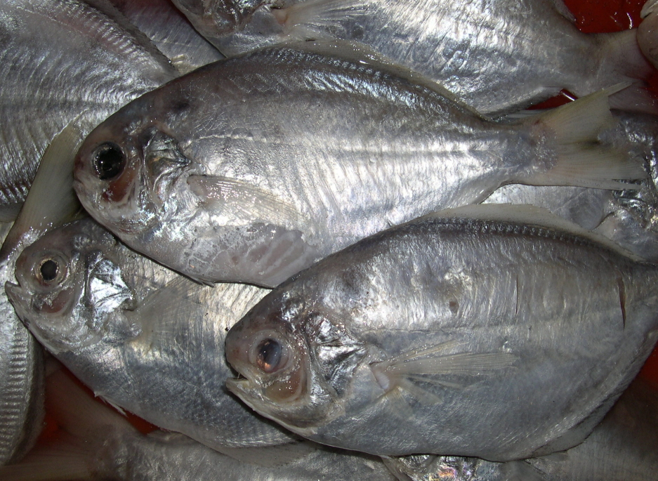 【鱼大侠】fh024鲜嫩肉鱼 单冻无包冰 网购好品质